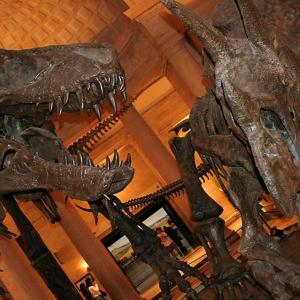٣- متحف التاريخ الطبيعي